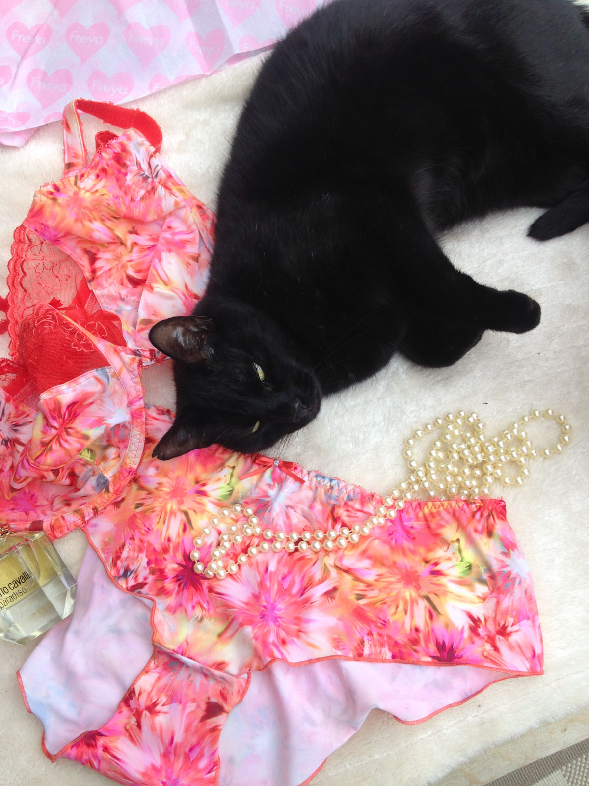 cat with Freya lingerie